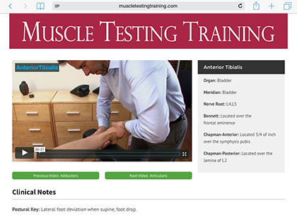 Muscle Testing Training